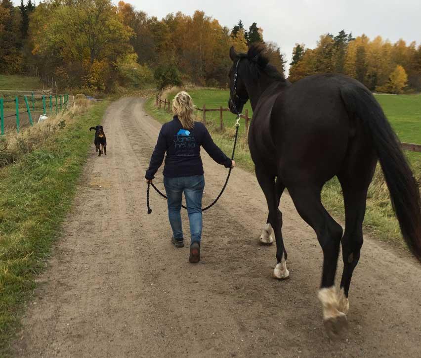 Janes Hälsa Kraniosakral terapi för häst och människa